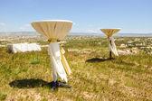 在一片草地上婚礼表 — 图库照片