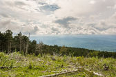 Landscape of a mountain forest with trees broken by wind in fron — Stock Photo