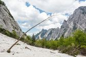 Alpine valley with trees bent by an avalanche — Stock Photo