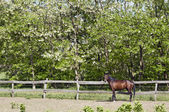 Horse on the farm with fence — Stock Photo