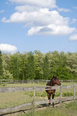 Horse on the farm with trees — Stock Photo
