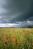 嵐大きい空で日当たりの良いポピー草原 — ストック写真