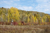Autumn yellow color forest with hunting stand — Stock Photo