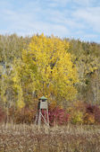 Autumn color forest with hunting stand vertical — Stock Photo
