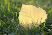 Yellow leaf with back lit — Stock Photo