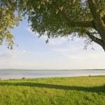 Big tree at lakeside — Stock Photo