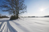 Wintry landscape with sun — Stock Photo
