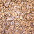 Dried leaves — Stockfoto