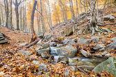 Stream in Montseny Natural Park — Stock Photo