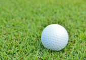 Golf ball on beautiful deep green grass — Stock Photo