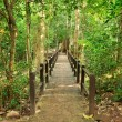 Stock Photo: Bridge in the forest