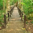 Bridge in the forest — Stock Photo #28001827