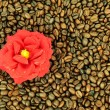 Stock Photo: Coffee and flower