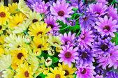 人工ガーベラの花の背景 — ストック写真