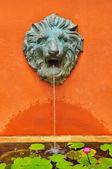 Lion fountain — 图库照片