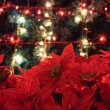 Red flowers with christmas tree — Stock Photo