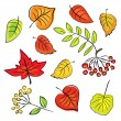 Autumn leaves on a white background (vector) — Stok Vektör