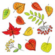 Autumn leaves on a white background (vector) — Image vectorielle