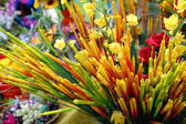 Colourful flowers and other plants — Stock Photo