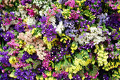 Colourful flowers — Stock Photo