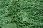 雨滴と草します。 — ストック写真
