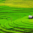 Beautiful terrace rice field with small houses in northwest Vietnam. — Stock Photo