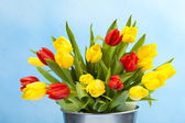 Colored tulips on blue — Foto Stock
