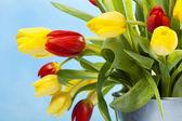 Gekleurde tulpen op blauw — Stockfoto