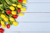 Colored tulips on blue — Stock Photo