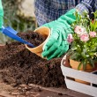 Planting flowers in the garden home — Stock Photo #49742415