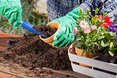 Planting flowers in the garden home — Stock Photo
