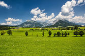 The houses in the meadow panorama — Stock Photo