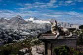 屋根の上犬 — ストック写真