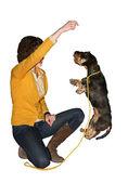 Happy dog — Стоковое фото