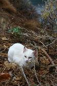 Witte kat — Stockfoto