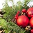 Christmas decoration, with pine cones and needles isolated on white — Stock Photo