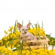 Little kitten and spring flowers — Stok fotoğraf