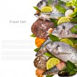 Foto de Stock  : Fresh fish