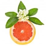 Citrus fruit - grapefruit — Stock Photo