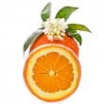 Citrus fruit - orange — Stock Photo