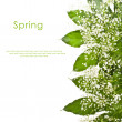 Green leaves and white small flowers isolated on white background with sample text — Stock Photo #27607301