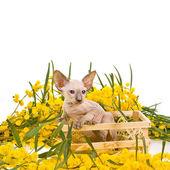 Küçük yavru kedi ve bahar çiçekleri — Stok fotoğraf