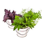 Fresh herbs - basil, dill and mint — Stock Photo