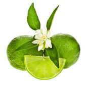Green limes whole fruit — Stock Photo