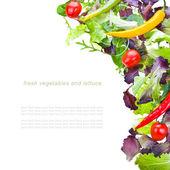 Fresh vegetables and lettuce — Stock Photo