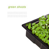 Green shoots — Stock Photo