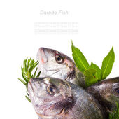 Fresh Dorado — Stock Photo