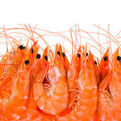 Shrimps close up isolated on white background — Foto Stock