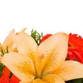Composizione di colori - crema giglio fiore e orange gerbera — Foto Stock