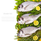 Fresh Dorado fish with fresh leaves and herbs and lemon — Stock Photo